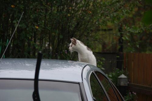 vikyz2008 — «Жизнь котячья» на Яндекс.Фотках