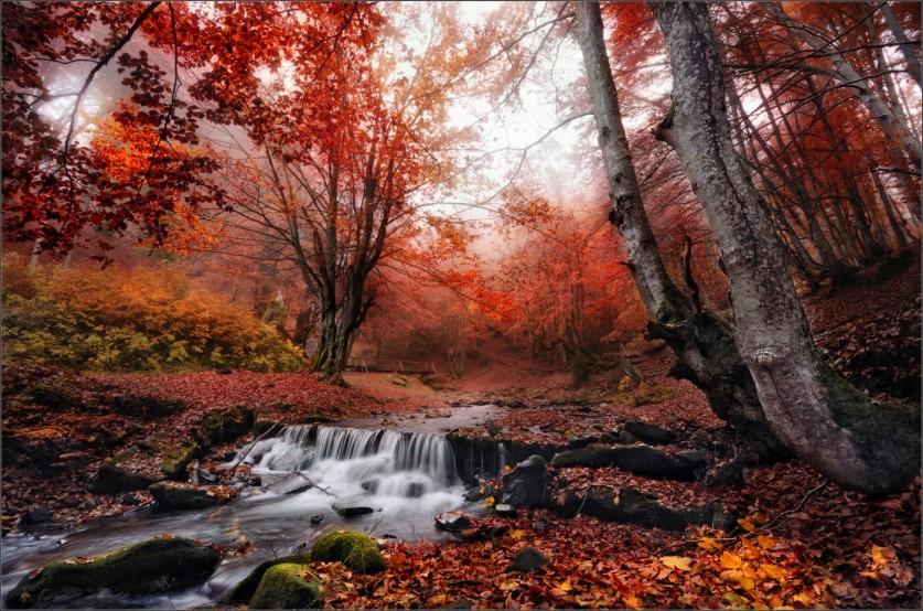 Фото: Влад Соколовский, «Прелести поздней осени»