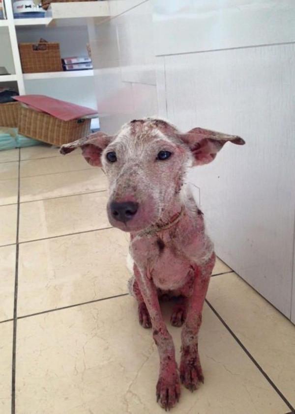 Счастливая случайность бедного пса