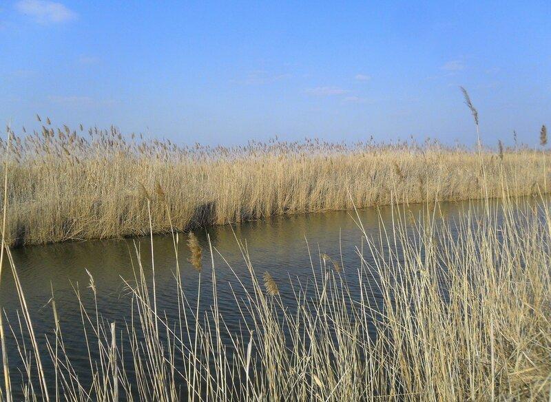 У мартовских вод ... SAM_5833.JPG