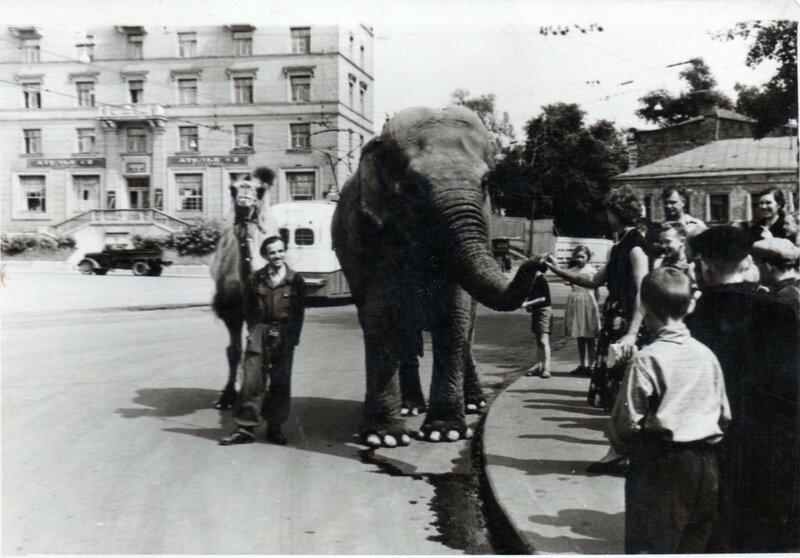 21518 Слониха Пунчи на Делегатской улице 1954 архив П. Створы.jpg