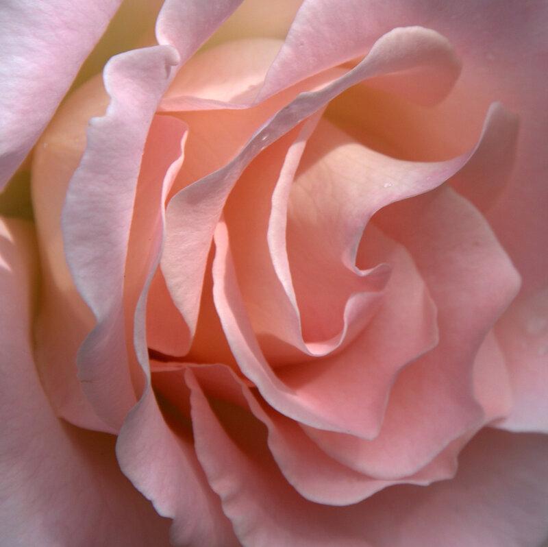 Как хороши,как свежи были розы...