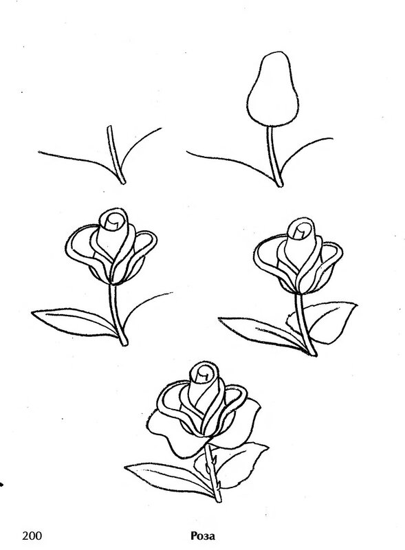 Картинки нарисованные карандашом цветы поэтапно 3