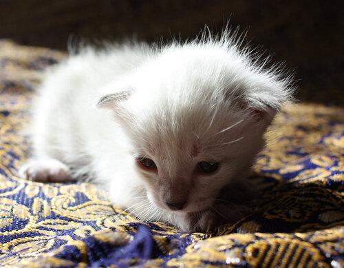 nujna — «младший кот в солнечном сиянии» на Яндекс.Фотках