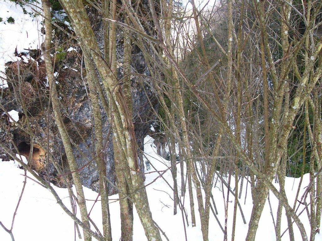 Снежный лесной вариант ... SDC18758.JPG