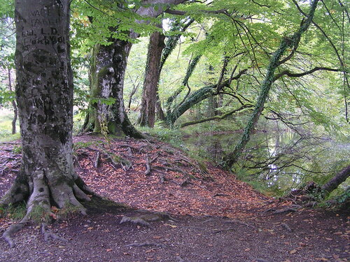 albinchik017 — «Заповедный лес.» на Яндекс.Фотках