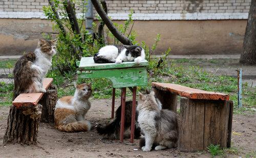 Ice Girl — «А на обед кот Васька:)» на Яндекс.Фотках