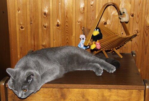 lega — «Тимоша на даче (7 мес.)» на Яндекс.Фотках