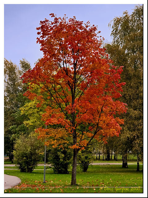 Яркие краски ранней осени