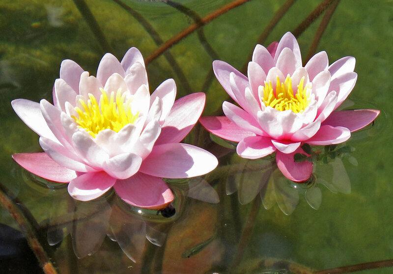 Южные цветы