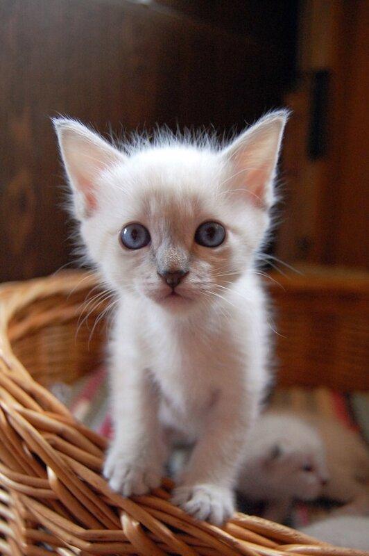 Как ухаживать за котенком: 3 советов по уходу для