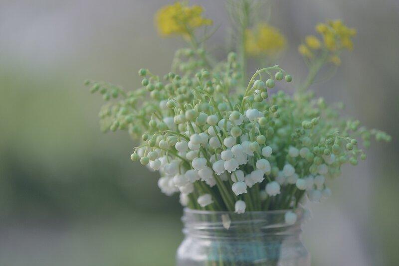 Весенние первоцветы