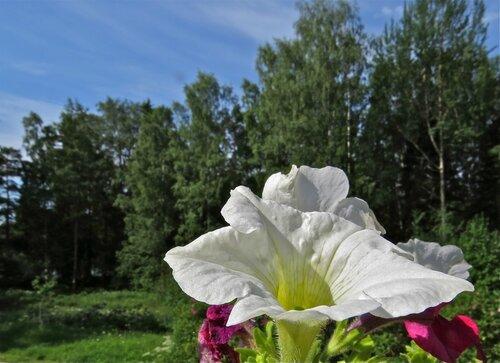под июльским солнышком