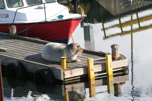 Даша — «Морской кот отдыхает» на Яндекс.Фотках