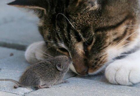 Антон — «Мышь и Кот» на Яндекс.Фотках