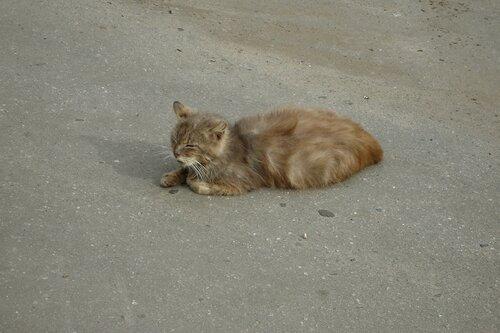 Элейн — «Старый кот» на Яндекс.Фотках