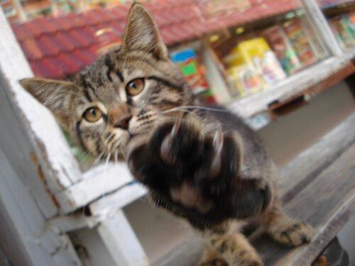 KOMProMISS — «Камеру убери!!!» на Яндекс.Фотках