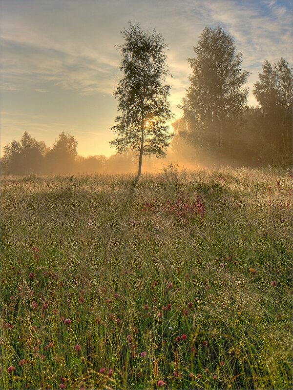 По утренней росе