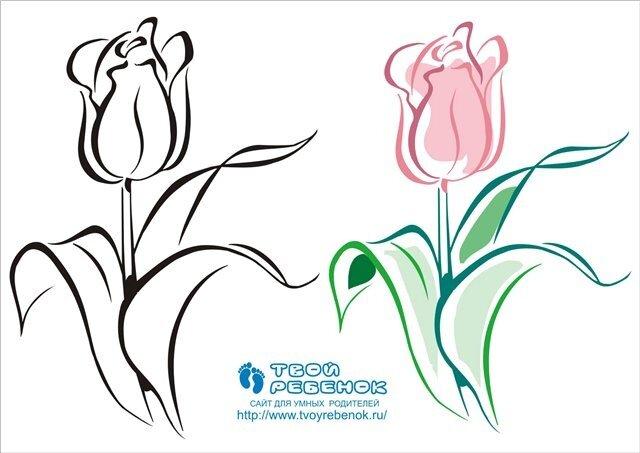 Букет цветов картинки нарисованные карандашом 8