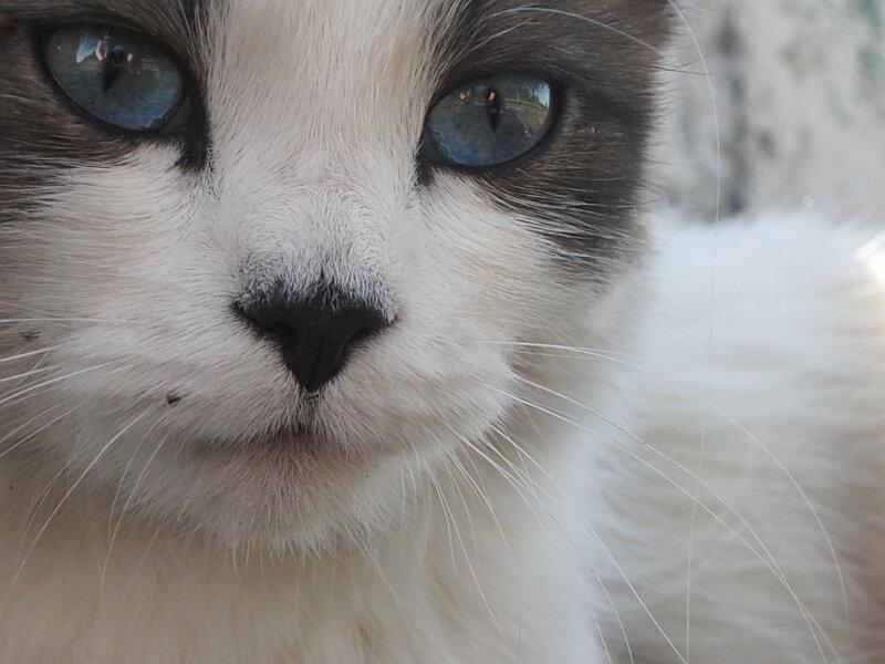 Жила-была самая обычная Небесная кошка.