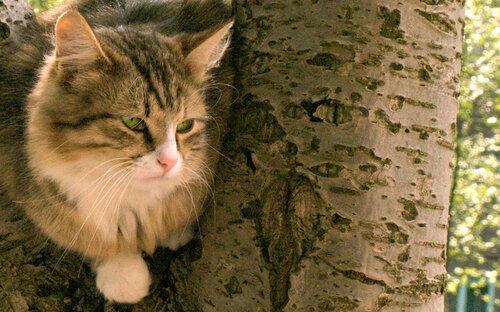 wega51 — «кот 12.06.jpg» на Яндекс.Фотках