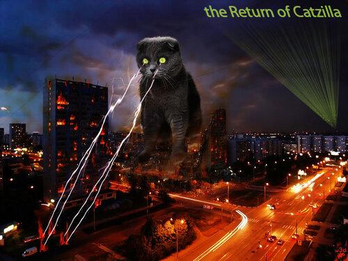w3d — «кот всегда возвращается!» на Яндекс.Фотках
