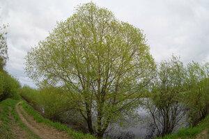 s:листопадные,s:деревья,s:листопадные кустарники