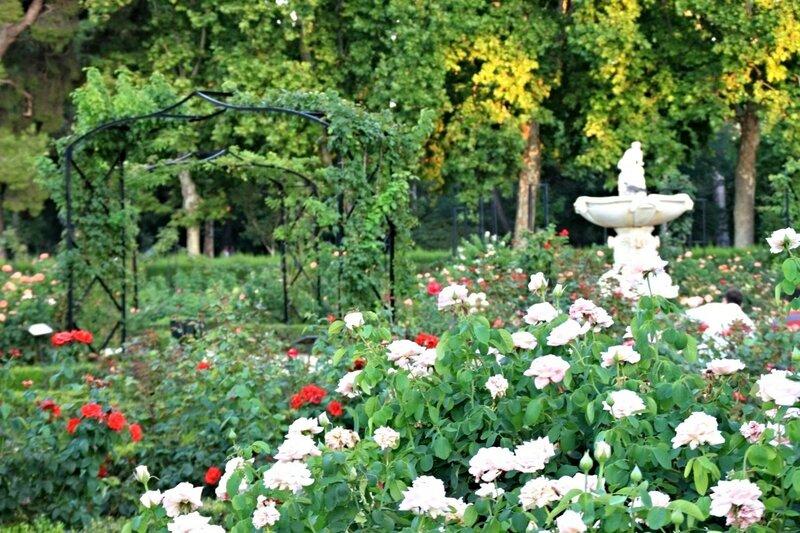 Мадрид, розы в парке Ретиро (Madrid rose in the Retiro Park)