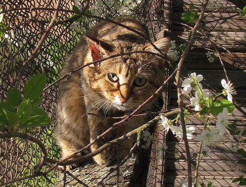 ArT-Look — «хитрый кот» на Яндекс.Фотках