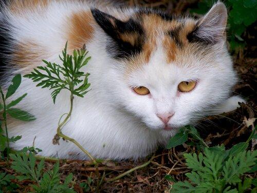 Ирина — «100_3047.jpg» на Яндекс.Фотках