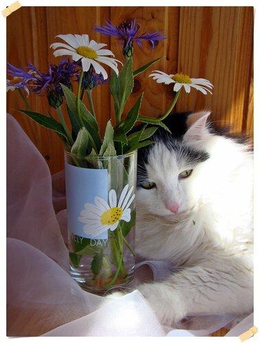 izumrudinka2009 — «Натюрморт  с  котом..» на Яндекс.Фотках
