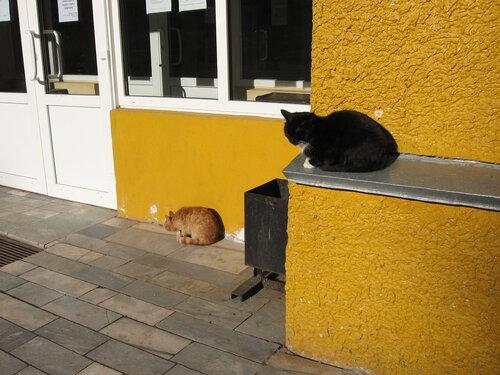 ksuschannna — «Внимание!         Сейчас откроется дверь - и........» на Яндекс.Фотках
