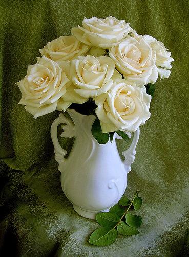 """""""Белые розы """" на Яндекс.Фотках."""