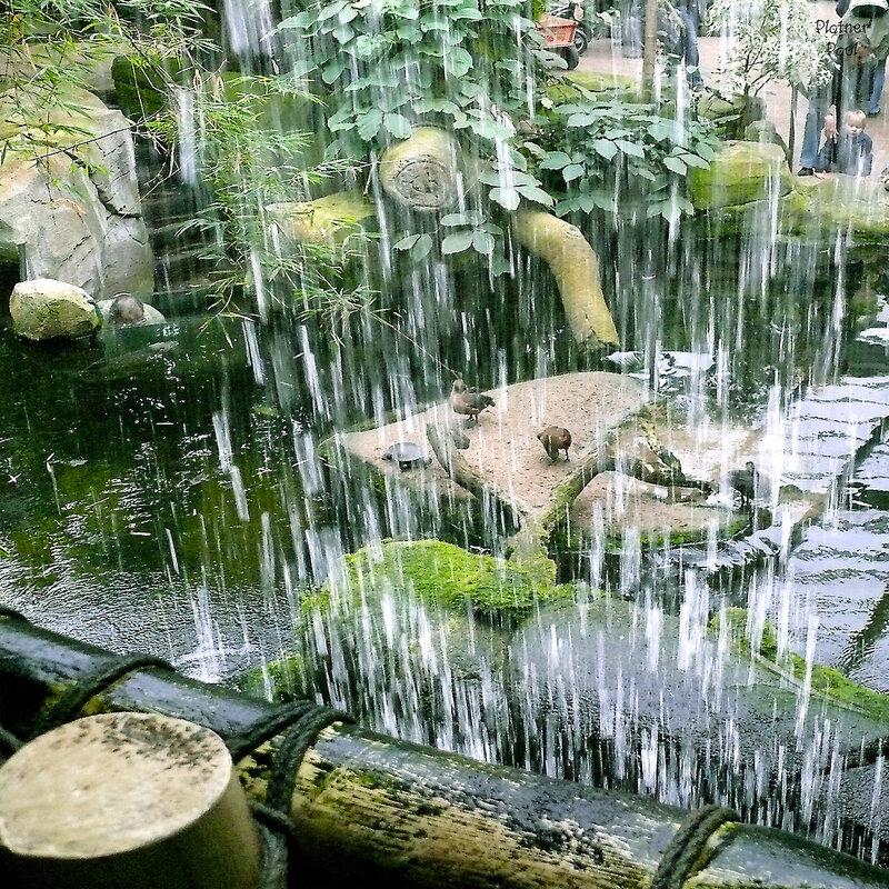 тропический лес в Кёльнском зоопарке
