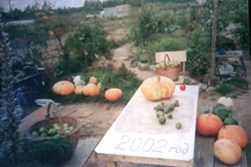 Тыквы - 2002
