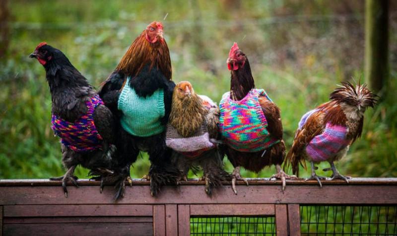 Курточки и свитера для спасенных цыпочек (4 фото)