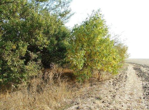У поля и леса ... DSCN1428.JPG