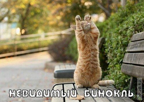 Коты и невидимые предметы