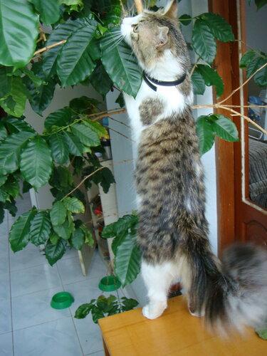 Ирина — «Сейчас на дерево залезу, если не отстанешь!» на Яндекс.Фотках