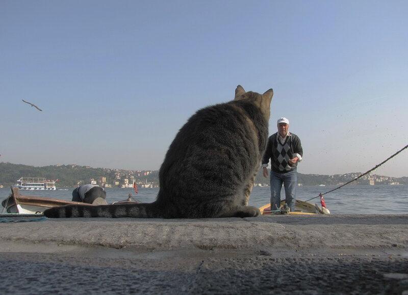 мужик в луже рыбу ловит