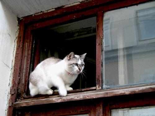 Shiny — «Наблюдая жизнь из окна» на Яндекс.Фотках
