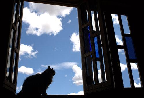 spdi5 — «Кошка на окошке» на Яндекс.Фотках