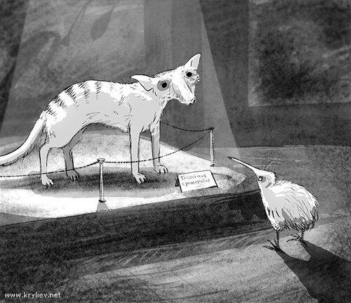 Киви в тасманском краеведческом музее
