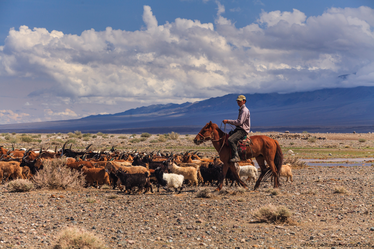 Монголия. Пустыня Гоби