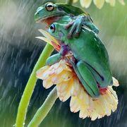 Приметы про лягушек