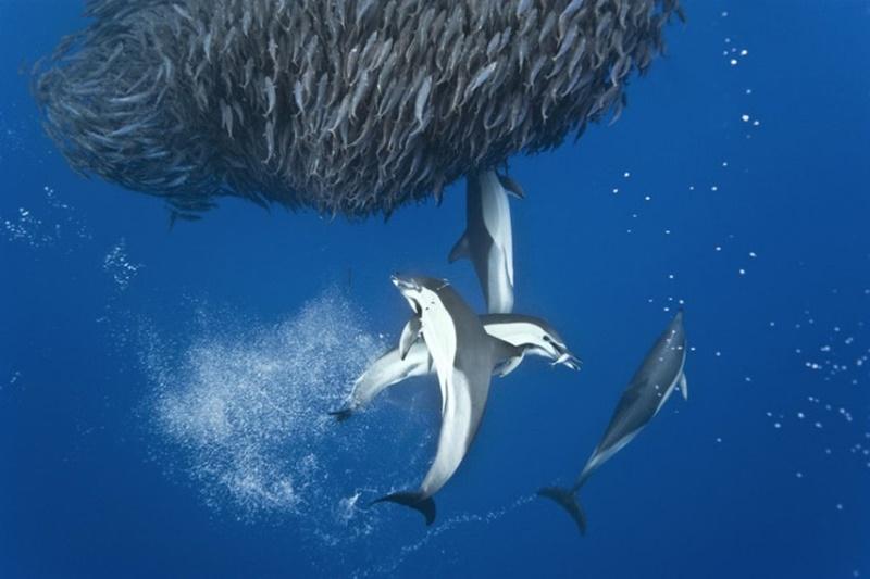 Дикая морская охота