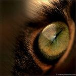 19_cateyes.jpg