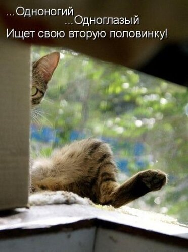 ♥°• Lenk@ •°♥ — «42908388_1240426632_1238197011_1237937568_kotomatrix_13.jpg» на Яндекс.Фотках