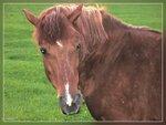 фауна-5* Лошадки