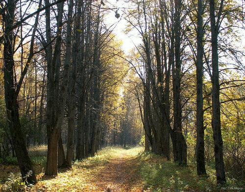 Аллея в парке Борщёвки